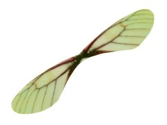 Szitakötő szárny Fülbevaló-, kellék